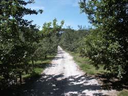 Cornish Cider Farms Orchard