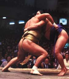 Sumo Wrestlers in season basho