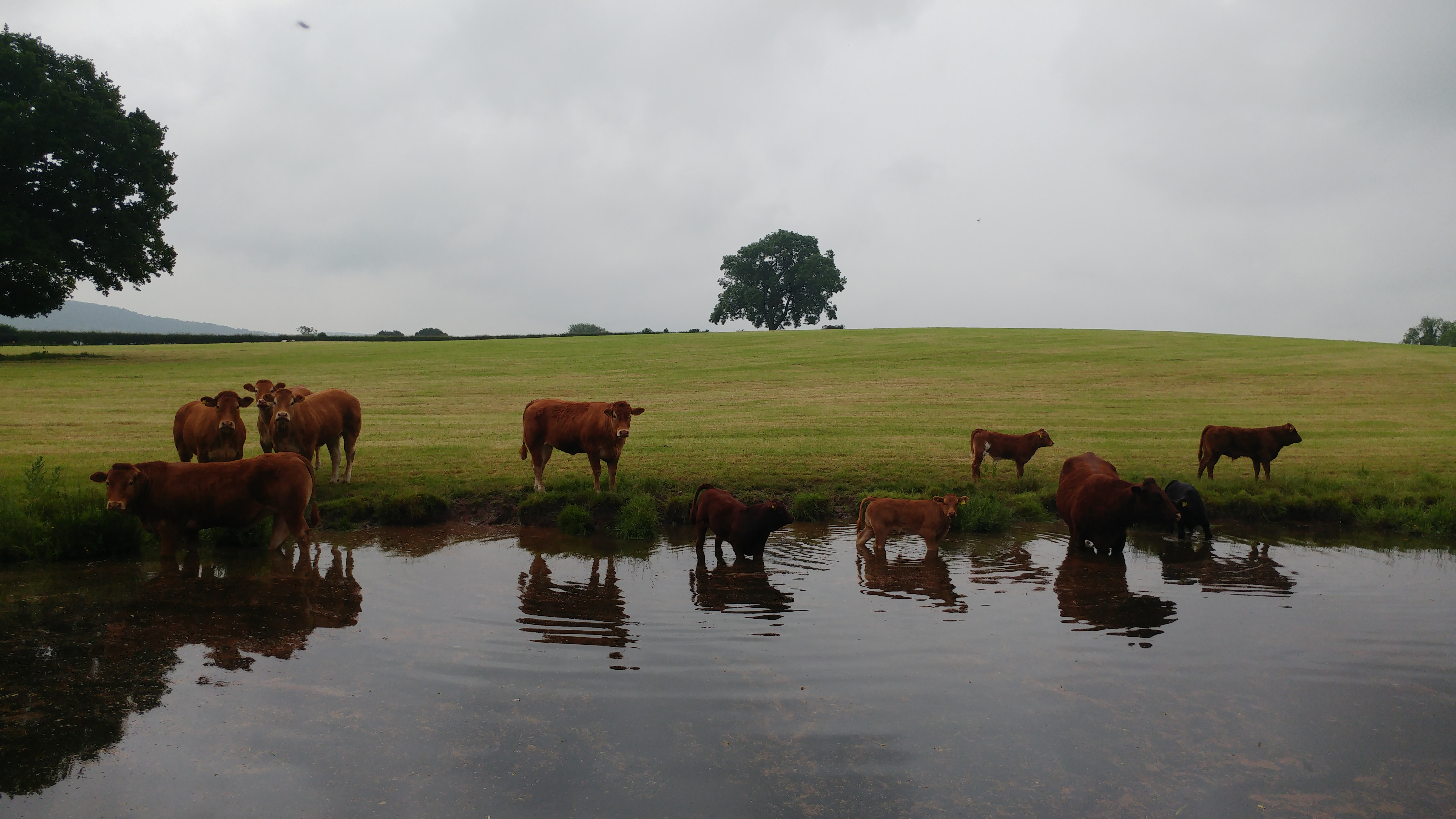 Bulls, near Buglawton