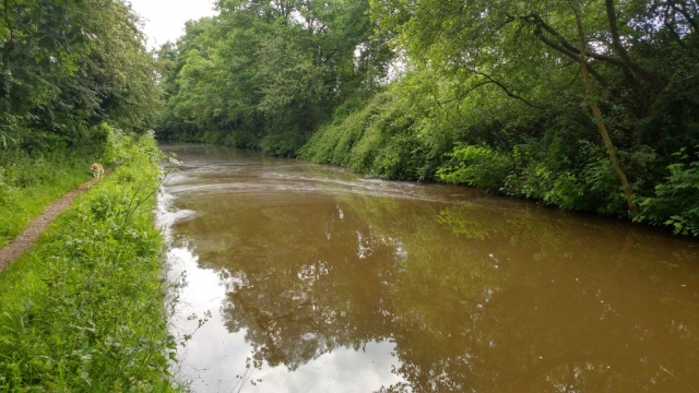 Scum on the canal waters, near Bridge 65