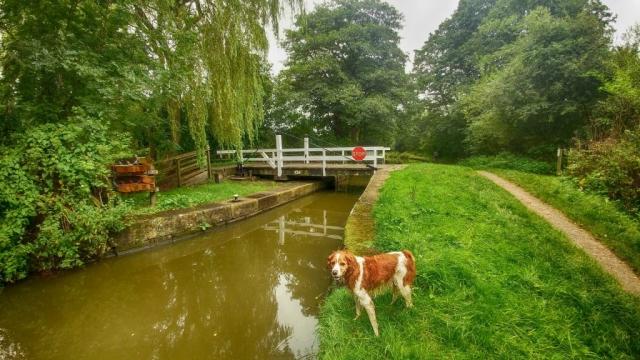 Swing bridge near Danes Moss, Lyme Park
