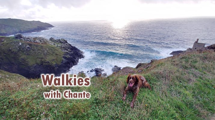 Walkies with Chante the Brittany header